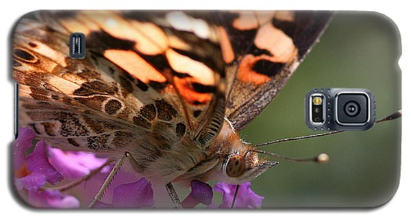 Painted Lady On Butterfly Bush Galaxy S5 Case