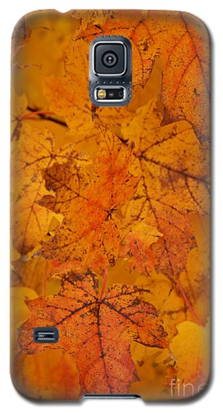 Galaxy S5 Case featuring the photograph Painted Leaves Of Autumn by Linda Shafer