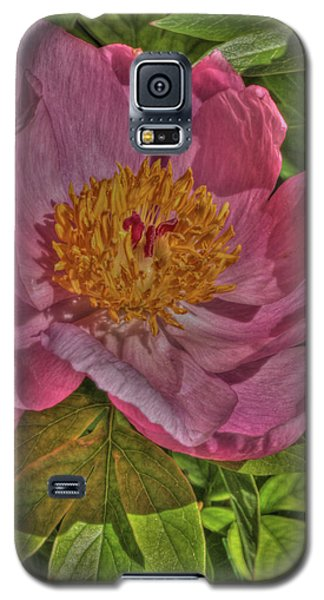 Galaxy S5 Case featuring the photograph Painterly Peony by Harold Rau