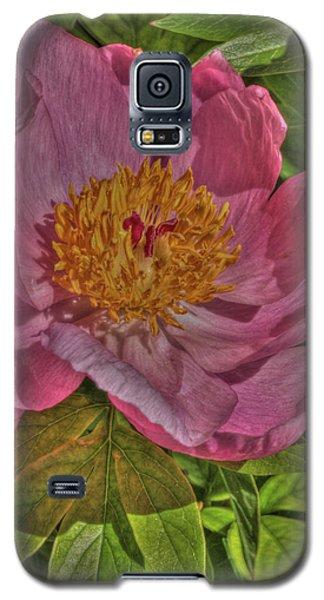 Painterly Peony Galaxy S5 Case