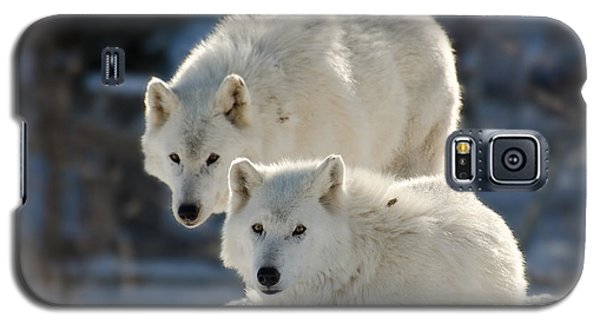 Pair Of Arctic Wolves Galaxy S5 Case