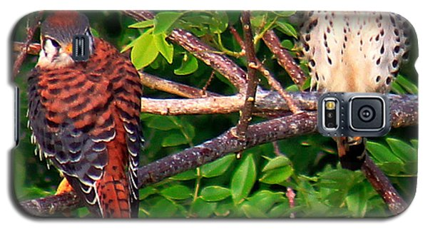 Caribbean Falcons Galaxy S5 Case