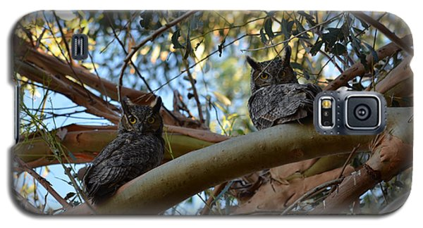 Pair Of Great Horned Owls Galaxy S5 Case