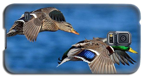 Pair Of Mallards In Flight Galaxy S5 Case by Rodney Campbell