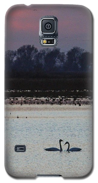 Pair Of Swan At Sunset Galaxy S5 Case