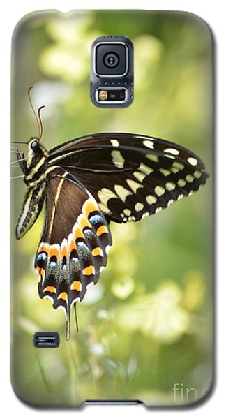 Palamedes Swallowtail 2 Galaxy S5 Case