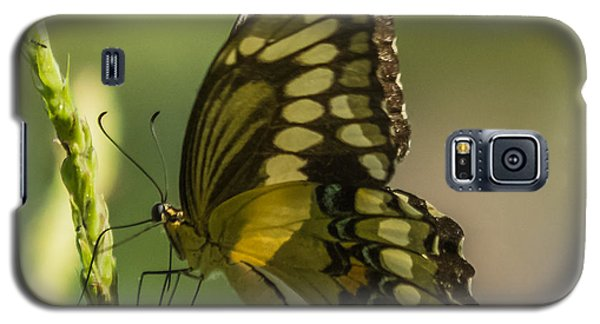 Galaxy S5 Case featuring the photograph Palamedes Swallowtail by Jane Luxton