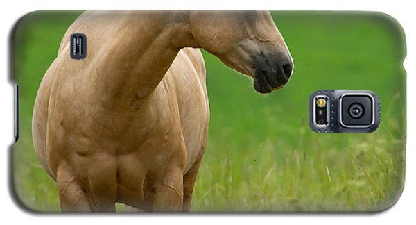 Pale Brown Horse Galaxy S5 Case by Torbjorn Swenelius