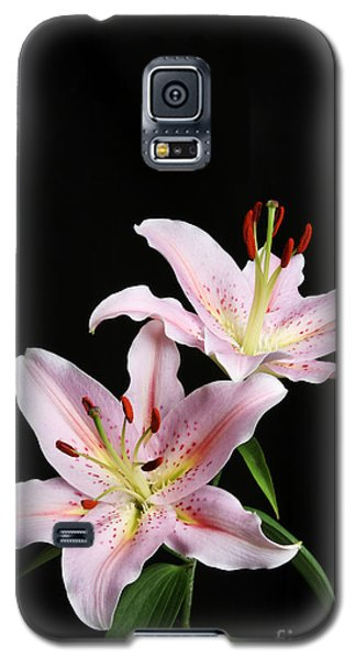 Pale Pink Asiatic Lilies Galaxy S5 Case by Judy Whitton