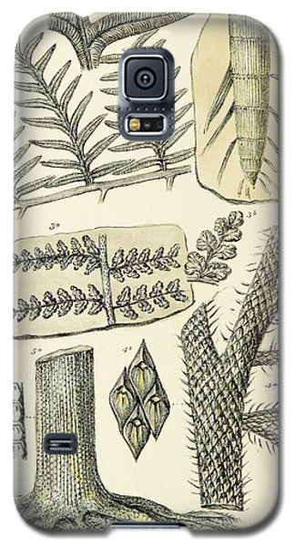 Galaxy S5 Case featuring the photograph Paleozoic Flora, Calamites, Illustration by British Library
