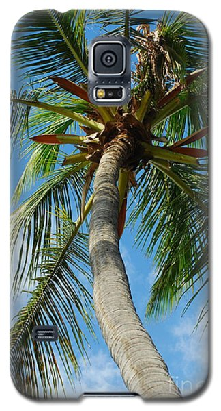 Palm And Sky Galaxy S5 Case