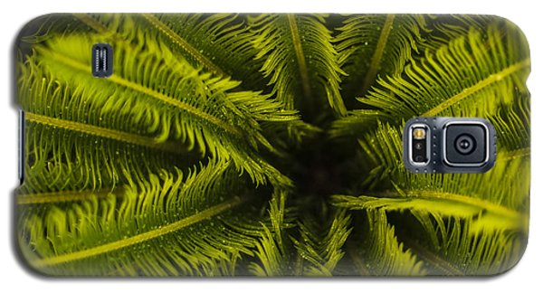 Galaxy S5 Case featuring the photograph Palm Fronds by Amber Kresge