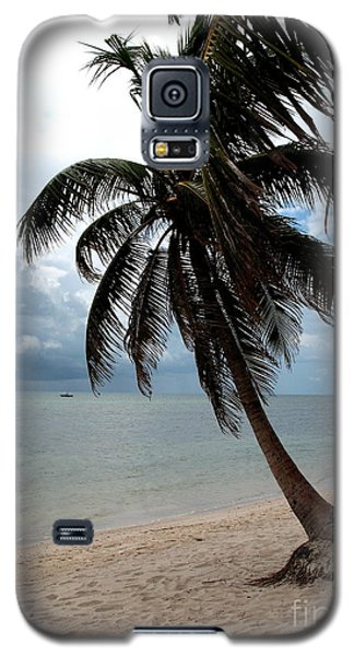 Galaxy S5 Case featuring the photograph Palm On The Beach by Christiane Schulze Art And Photography