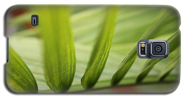 Palm Galaxy S5 Case by Paul Cammarata