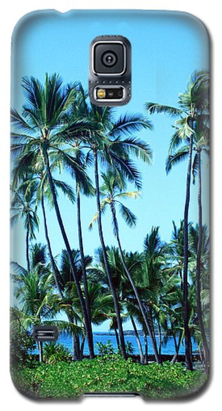 Galaxy S5 Case featuring the photograph Palm Tree Gathering by Karen Nicholson