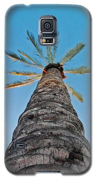Palm Tree Looking Up Galaxy S5 Case