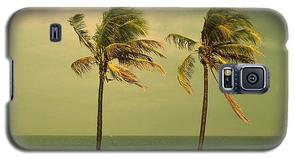 Palm Trees At Hallendale Beach Galaxy S5 Case