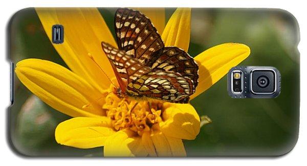 Palmer's Metalmark Butterfly Galaxy S5 Case