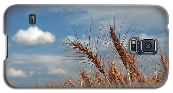 Palouse Gold Galaxy S5 Case