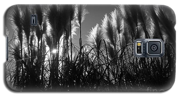 Pampas Grass Tufts In Silhouette  Galaxy S5 Case