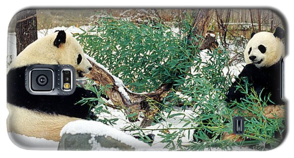 Panda Bears In Snow Galaxy S5 Case