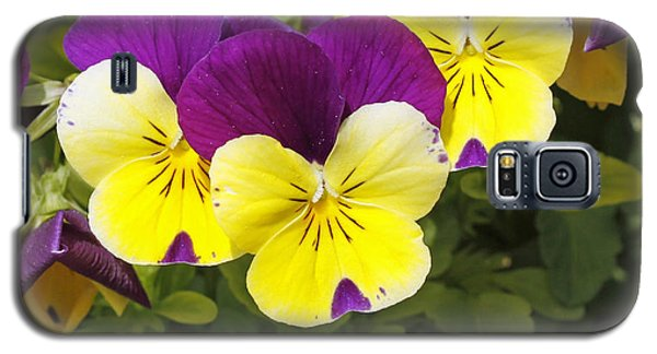 Galaxy S5 Case featuring the photograph Pansies by Denise Pohl