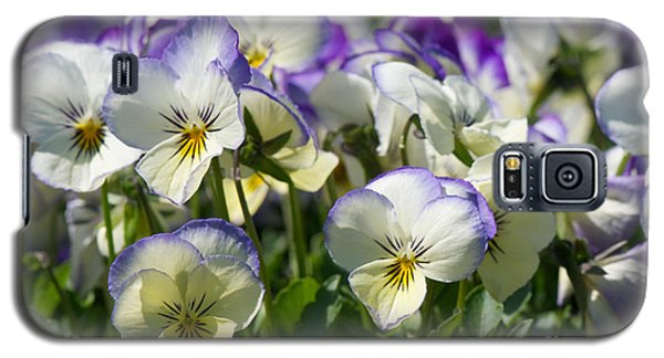 Pansies In Loomis Galaxy S5 Case