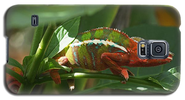 Panther Chameleon Madagascar 1 Galaxy S5 Case by Rudi Prott