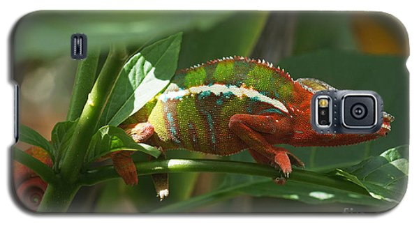 Panther Chameleon Madagascar 1 Galaxy S5 Case