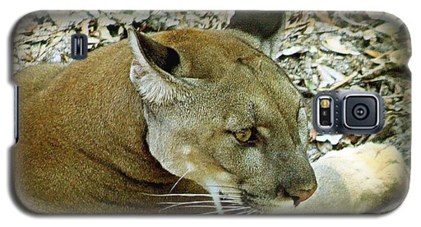 Galaxy S5 Case featuring the photograph Panther by Debra Forand