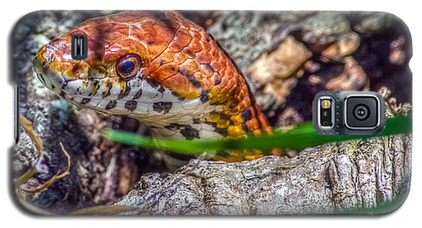 Pantherophis Guttatus Galaxy S5 Case by Rob Sellers