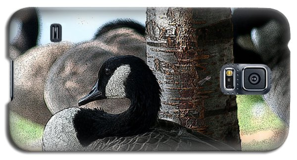 Galaxy S5 Case featuring the photograph Pap Daddy Big Spring Park by Lesa Fine