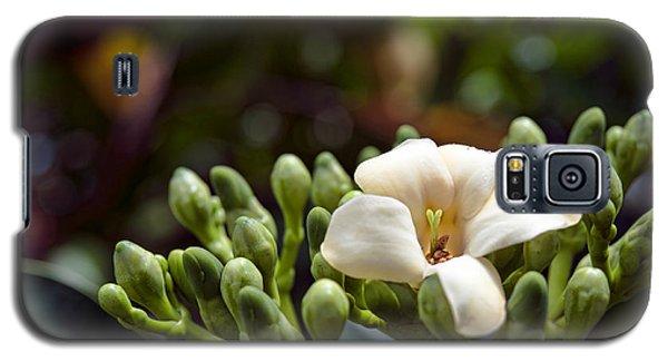 Papaya Flower Galaxy S5 Case