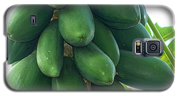 Papaya Tree With Green Papayas Galaxy S5 Case by Yali Shi