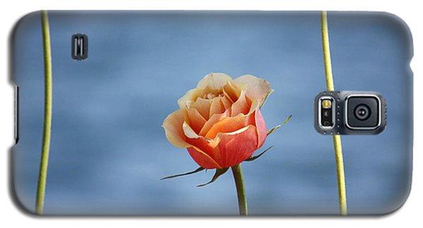 Galaxy S5 Case featuring the photograph Papaya's World by The Art Of Marilyn Ridoutt-Greene