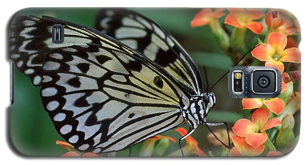 Paper Kite Butterfly Galaxy S5 Case
