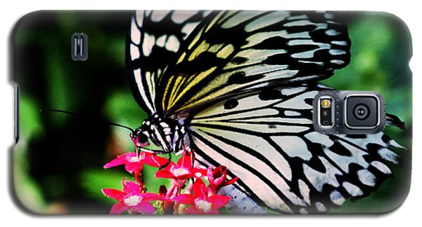 Paper White Butterfly Galaxy S5 Case