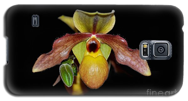 Paphiopedilum 'summer Ice' Orchid Galaxy S5 Case