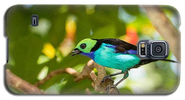 Paradise Tanager Galaxy S5 Case by Doug McPherson