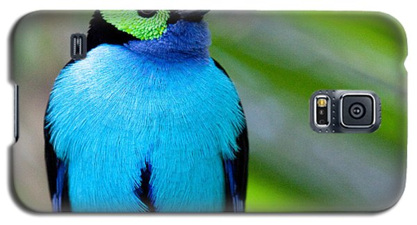 Paradise Tanager Galaxy S5 Case by Nathan Rupert