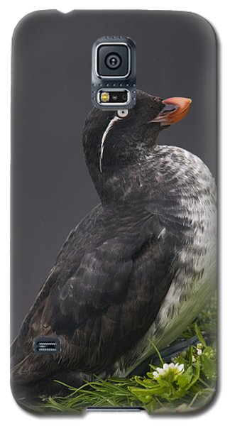 Parakeet Auklet Sitting In Green Galaxy S5 Case by Milo Burcham