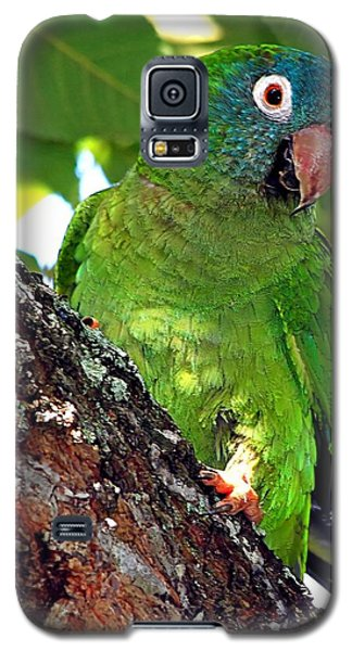 Parakeet In A Tree Galaxy S5 Case