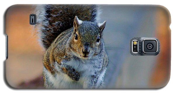 Park Squirrel I Galaxy S5 Case by Daniel Woodrum