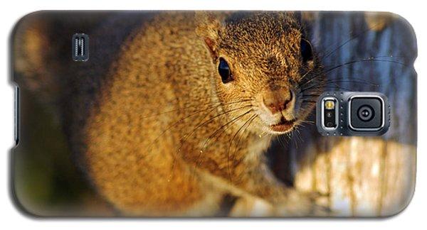 Park Squirrel II Galaxy S5 Case by Daniel Woodrum
