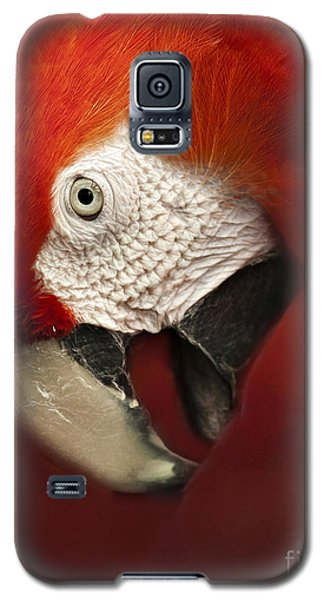 Parrot Portrait Galaxy S5 Case