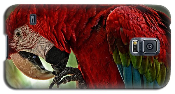 Parrot Preen Hdr Galaxy S5 Case