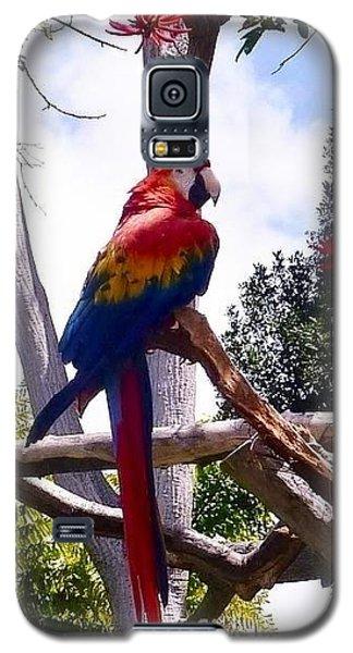 Parrot Galaxy S5 Case by Susan Garren