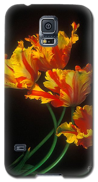 Galaxy S5 Case featuring the photograph Parrot Tulips On Easter Morning Vertical by Arthaven Studios