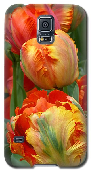 Parrots At Play Galaxy S5 Case
