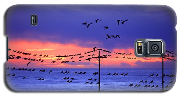 Galaxy S5 Case featuring the photograph Parrots by Bernardo Galmarini